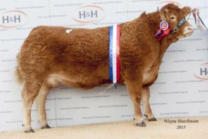 Brockhurst Howzot sold for a sale topping 24,000gns